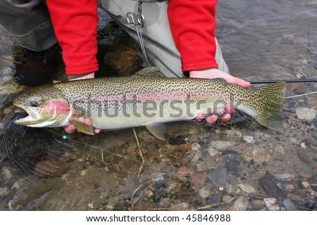 Idaho Steelhead trout - stock photo