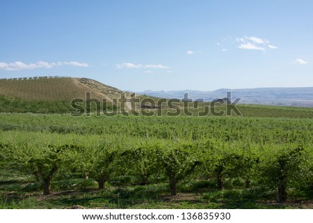 Idaho wine country - stock photo