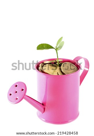 Idea of money tree - plant grows in pink watering can - stock photo