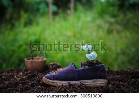 Ideas about housing needs of the tree.Seedlings germinated from shoes.concept of new life - stock photo