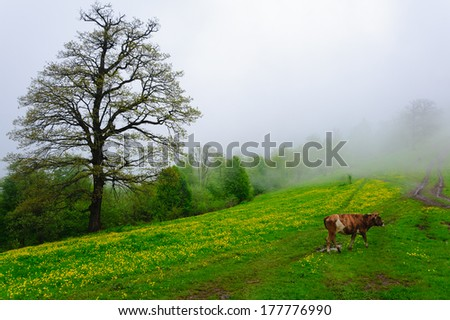 Idyllic alpine landscape - stock photo