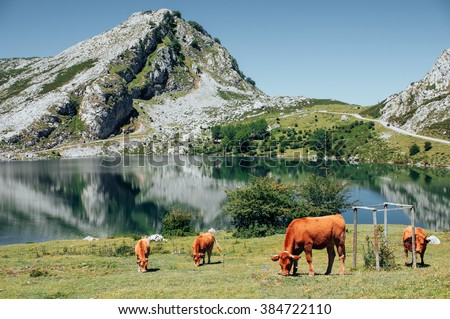 Idyllic alpine landscape: brown cows grazing on a meadow close to the mountains and a lake with stunning reflection in the water - stock photo