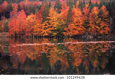 Idyllic forest path by the lake in autumn. - stock photo