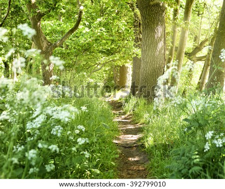 Idyllic forest path with white flowers and smith sunbeams. Nature background, spring forest. Selective focus of a footpath through a mixed forest with flowers next to the path. - stock photo