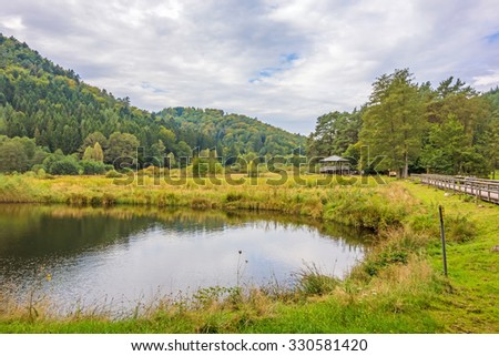 idyllic green forest landscape with pond in the foreground  - stock photo
