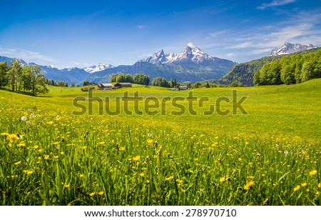 Idyllic landscape in the Alps with fresh green meadows and blooming flowers and snow-capped mountain tops in the background - stock photo