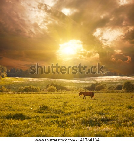 idyllic landscape with horse in sunlight - stock photo