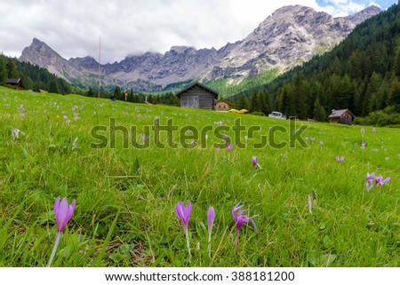 Idyllic mountain panorama during the summer season in Val San Nicolo, in the Dolomites Area