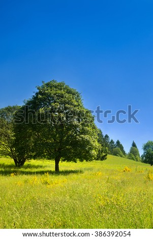 Idyllic rural scenery with tree, green meadow and deep blue sky, landscape in France - stock photo