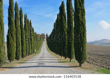 Idyllic Tuscan landscape with dirt road and cypress near Pienza, Vall d'Orcia Italy, Europe - stock photo