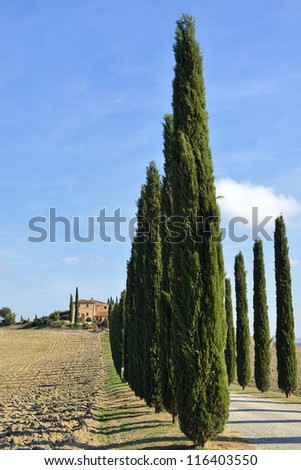 Idyllic Tuscan landscape with dirt road and cypress near Pienza, Vall d'Orcia Italy, Europe