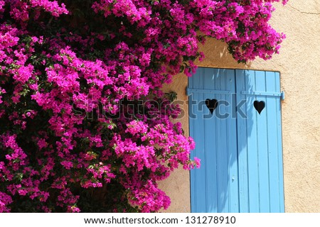 Idyllic view of South houses / Hot and sunny summer day in Porquerolles (French Riviera) - bright Bougainvillea bush around the window with blue shutters with heart-shaped cuts on it. - stock photo