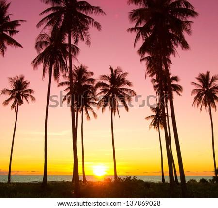 Idyllic Wallpaper Palm Paradise - stock photo