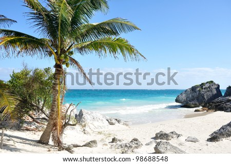 Idyllic White Sand Beach with Palm Tree on the Caribbean Sea - stock photo