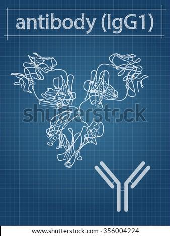 IgG1 monoclonal antibody (immunoglobulin). Many biotech drugs are antibodies. Cartoon structure and simplified cartoon. Blueprint style. - stock photo
