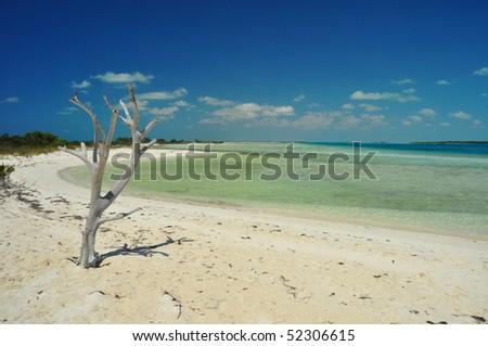Iguana island in Turks & Caicos - stock photo