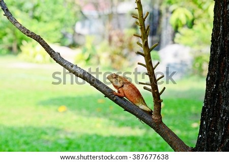 iguana on the branch, tree lizard, chameleon, colorful reptile, animal moment - stock photo