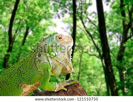 Iguana on tree in green forest - stock photo
