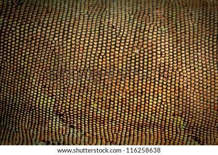 Iguana skin macro shot. - stock photo