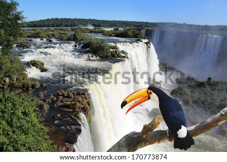 Iguazu Waterfall with a giant toucan bird in foreground - stock photo
