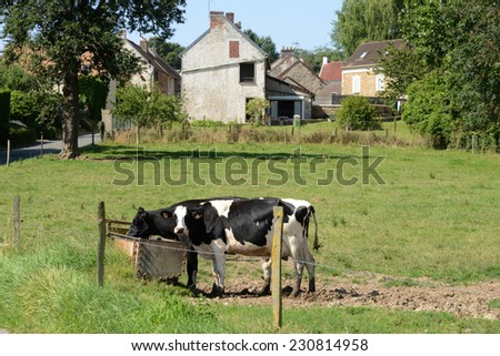 Ile de France, cows in the picturesque village of Wy - stock photo