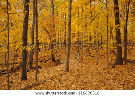 Illinois forest in fall