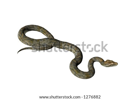 Illustrated and isolated snake