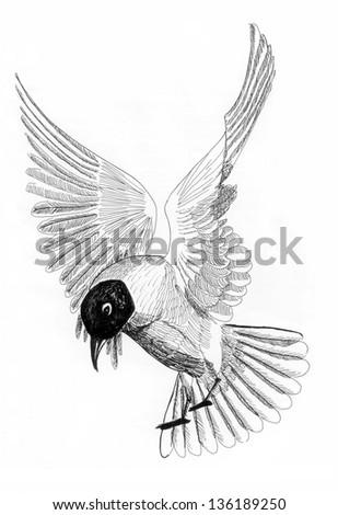 illustration bird sea gull - stock photo