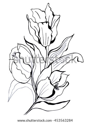 Hand Drawn Tulips Vector Stock Vector 113427214 - Shutterstock