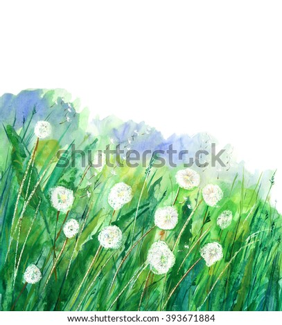 illustration dandelion flower.Summer dandelion flower.Meadow plant background. - stock photo