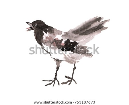 Illustration drawing of watercolor magpie bird on isolated background