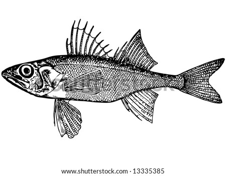 Illustration. For that what to draw and describe the given figure it would be necessary to read through and see many magazines and books. The small fish, like a ruff. Distinctive features: Eyes big