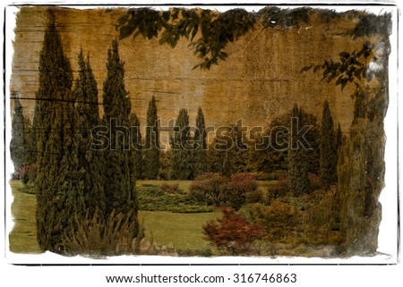 Illustration grunge and worn of a beautiful corner of the  countryside with cypresses, maples and ferns painted on the wooden table