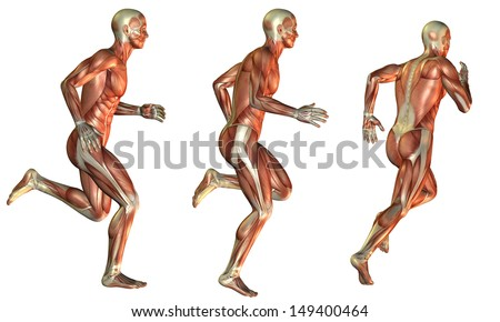 Illustration muscle in man - stock photo