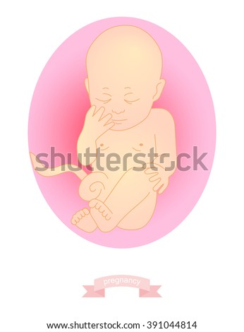 illustration of a baby in the womb - stock photo