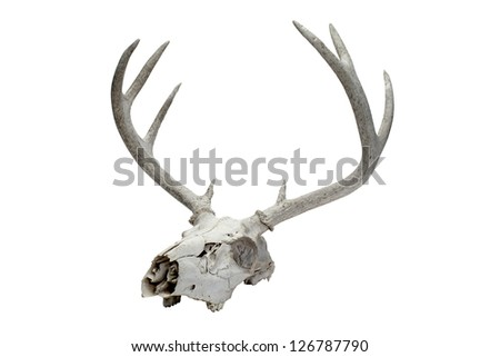 Illustration of a deer skull with a long horn - stock photo