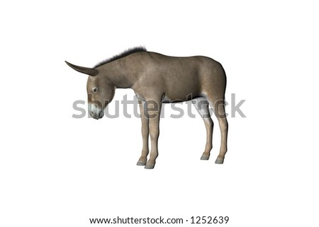 Illustration of a donkey or mule