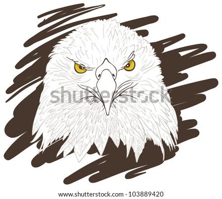 Illustration of a Eagle head. - stock photo