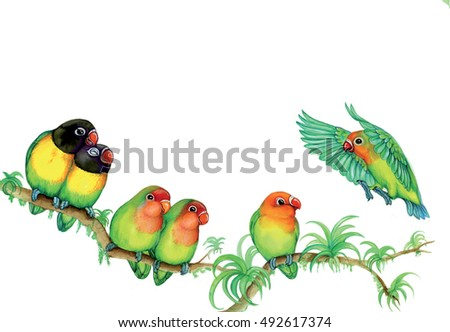 illustration of a group of lovebird (Agapornis)