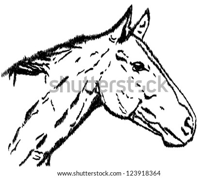 Illustration of a horse's head.  Raster image