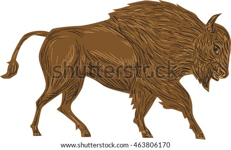 Hairy bison in the north