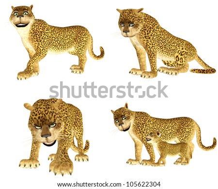 Illustration of a pack of four (4) leopards with different poses and expressions isolated on a white background