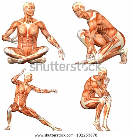 Illustration of a pack of four (4) male characters showing the human body anatomy with different poses isolated on a white background - 3of3