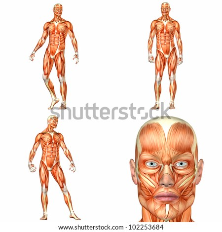 Illustration of a pack of four (4) male characters showing the human body anatomy with different poses isolated on a white background - 1of3 - stock photo