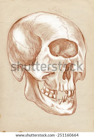 Illustration of a series of legendary animals and monsters (skeleton): CYCLOPS, skull. An hand drawn and painted full sized illustration (Original). Version: Drawing on old paper. - stock photo