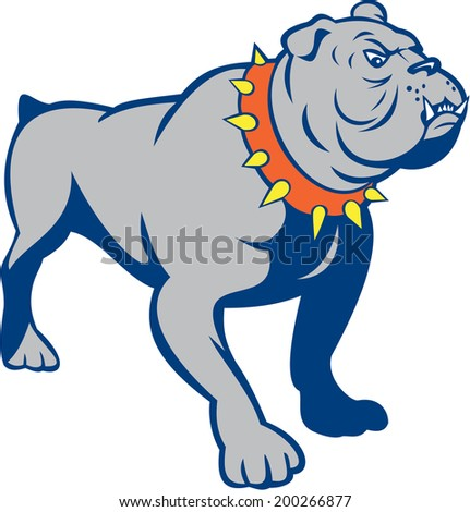Illustration of an angry bulldog standing looking to the side on isolated white background done in cartoon style.