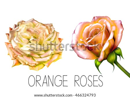 Illustration of Beautiful yellow orange flowers, set of spring flowers: rose, bell flower isolated on white background