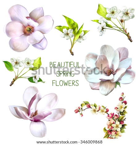 Illustration of cherry tree blossom, calla flower, magnolia flower, white orchid flower, white rose flower isolated on white background - stock photo