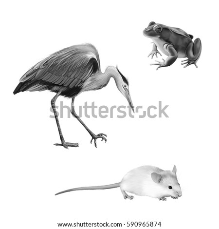 illustration of Crane bird, white mouse and frog isolated on white background, Grey Heron standing hunting with head bent down, Ardea Cinerea,