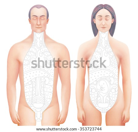 Illustration of excised bodies (man and woman) with drawn outlined inner organs. Perfect to combine with vector images of this set. - stock photo